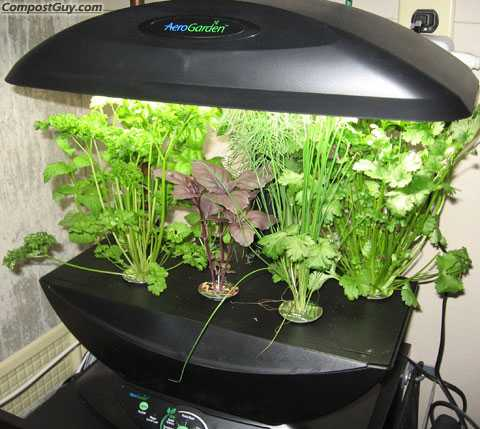 Learn Indoor Gardening In A Jiffy