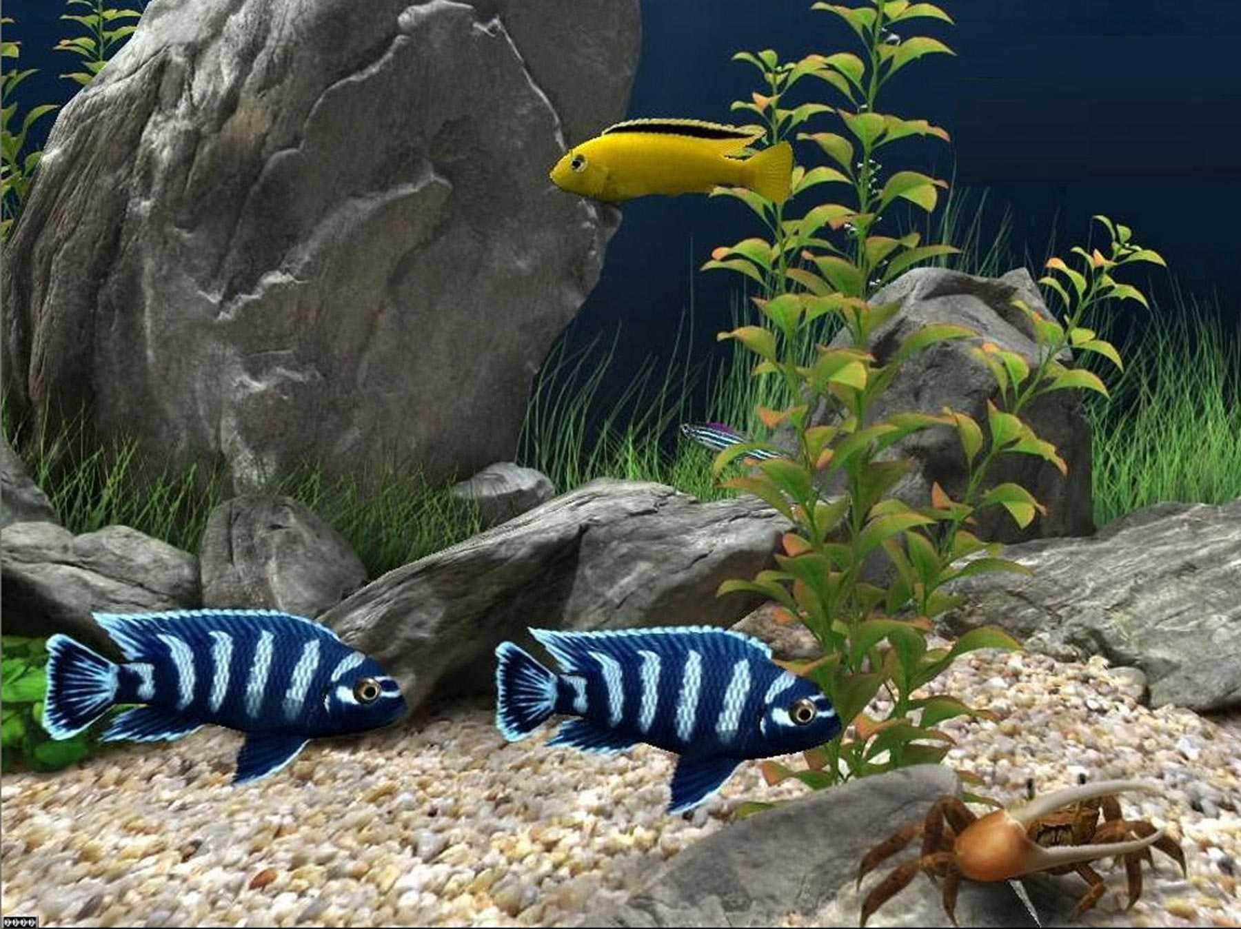 Fish Aquarium In Coimbatore - One