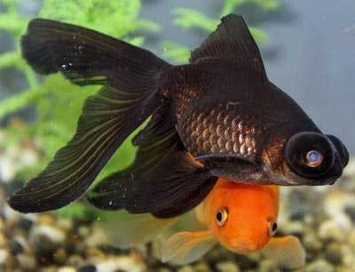 Fish Aquarium a Best Remedial Measure for Vastu Defect