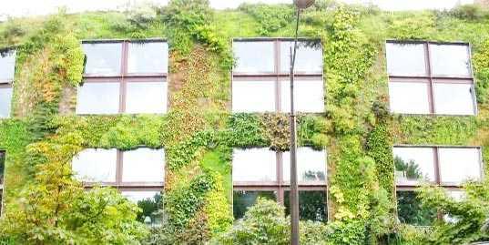 Vertical garden ideas for your apartment