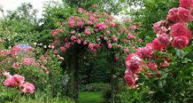 Tips to design an English rose garden in your apartment